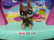 Фигурка Littlest pet shop собака-стоячка дог коричневая (звездочки в глазах)