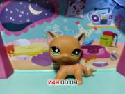 Фигурка Littlest pet shop кошка-стоячка оранжевая с жёлтыми полосками с магнитом